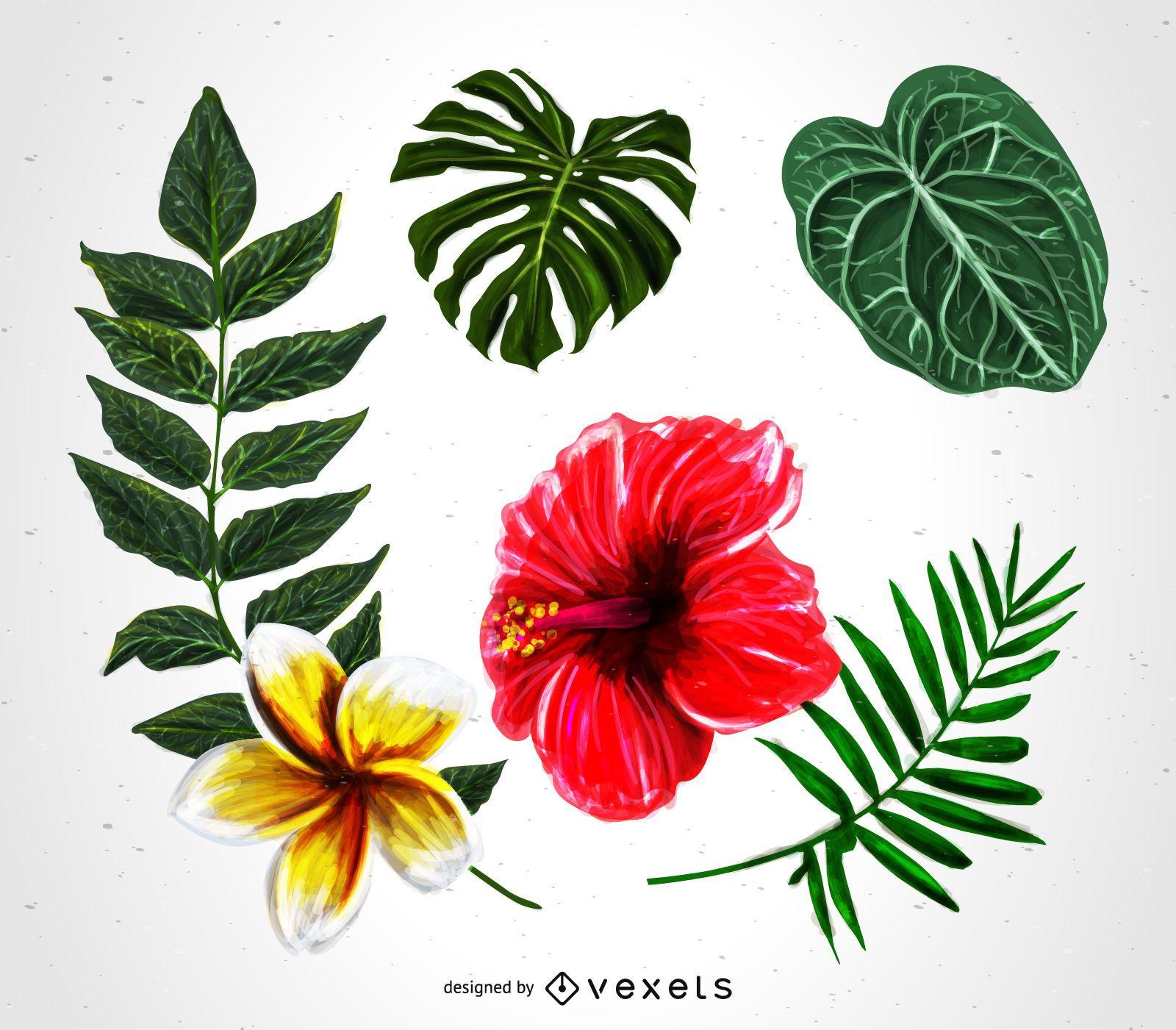 Tropical plants illustration set