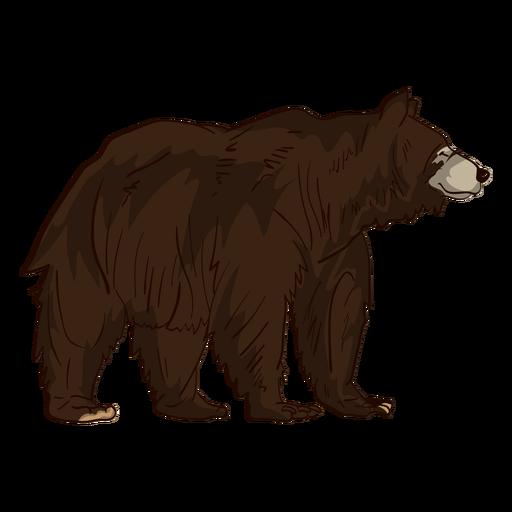 Dibujos Animados De Oso Grizzly Marron Descargar Png Svg Transparente