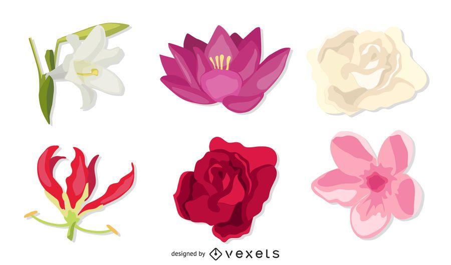 Exotische Blumenköpfe eingestellt
