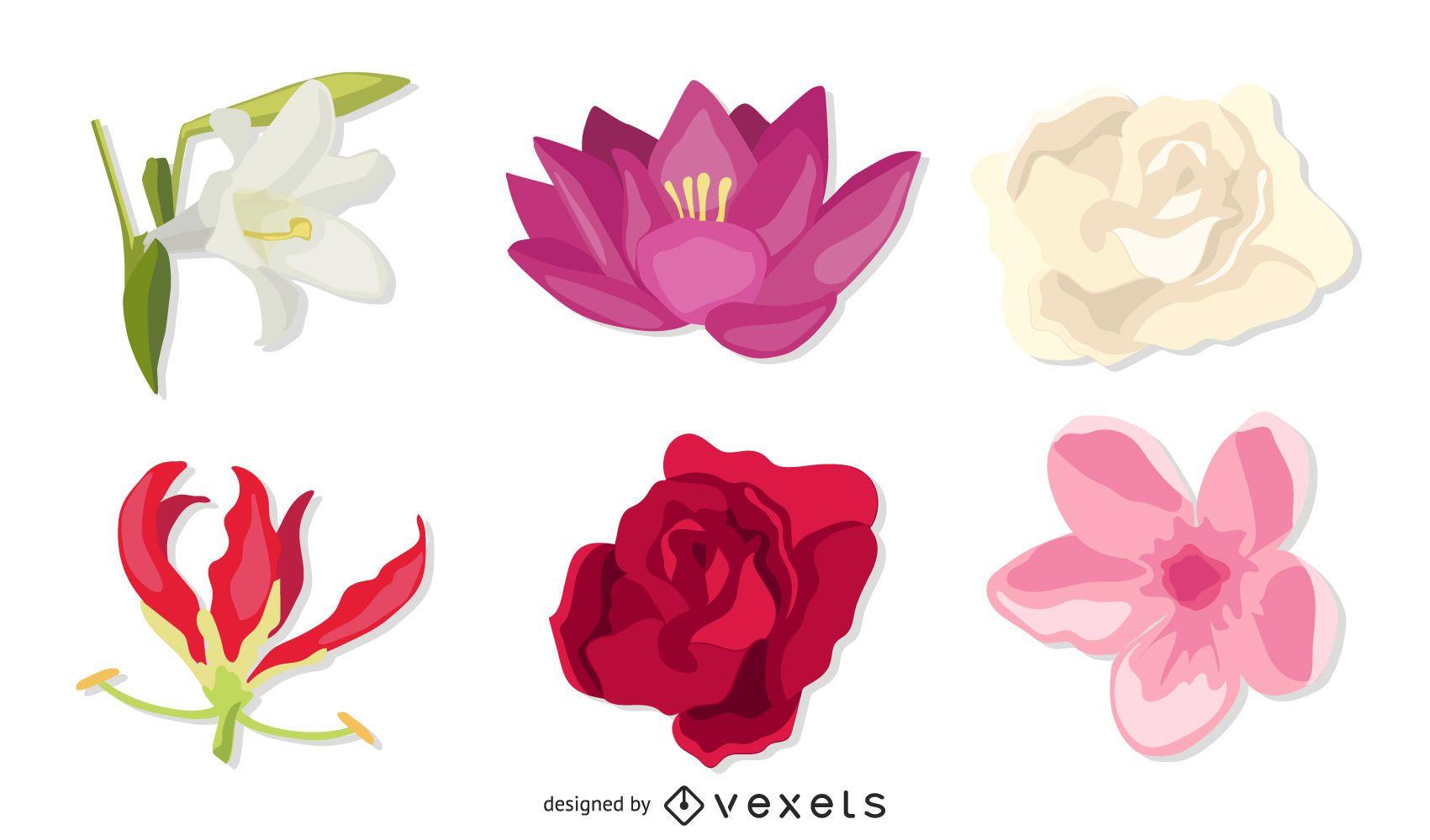 Conjunto de cabezas de flores ex?ticas
