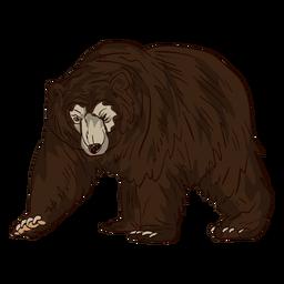 Dibujos animados anciano de oso pardo