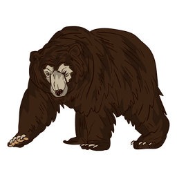 Elder brown bear cartoon