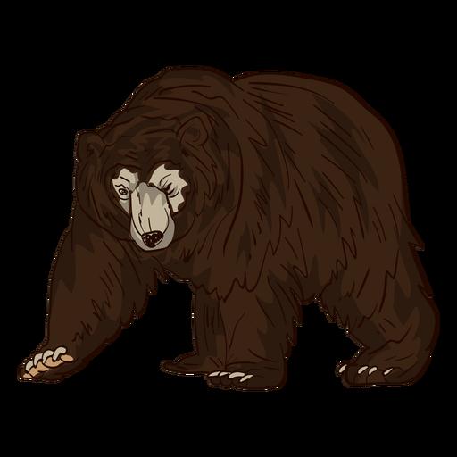 Dibujos animados del oso pardo anciano Transparent PNG