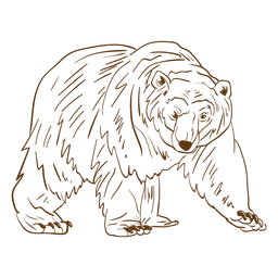 Desenhos animados do curso do urso marrom mais velho