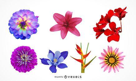 Conjunto de ilustración de hermosas cabezas de flores realista