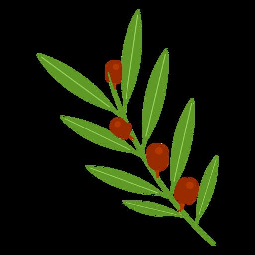 Icono de rama de olivo Transparent PNG