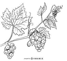 Vid de uva dibujado a mano ilustración