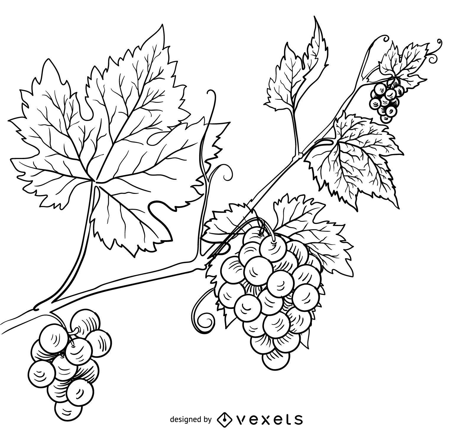 Ilustración de dibujado a mano de vid de uva