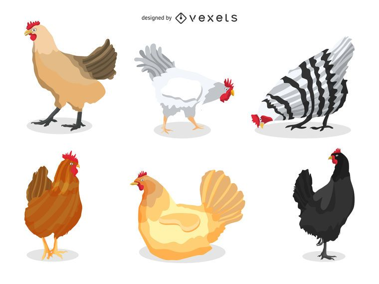 Conjunto de ilustração de frango