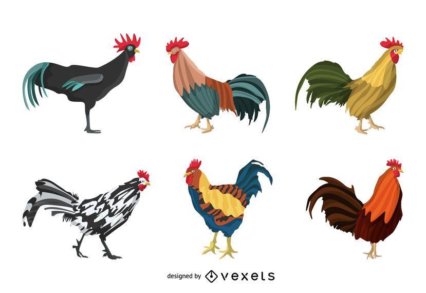 Conjunto de ilustración de gallo