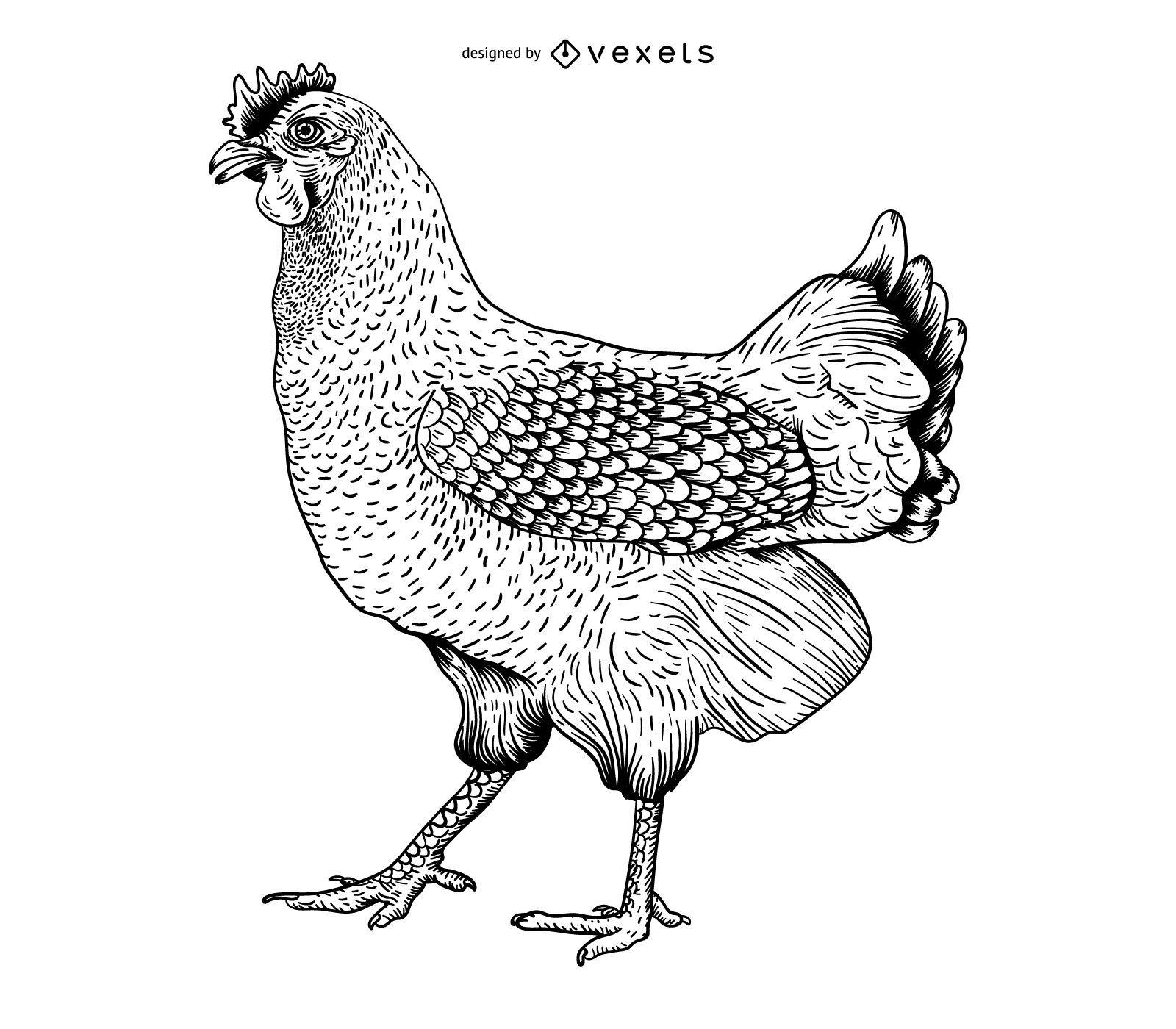 Chicken engraving illustration