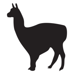 Isolated llama animal