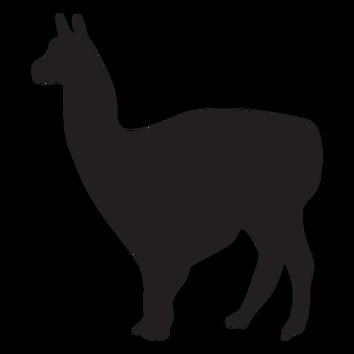 Llama aislada animal Transparent PNG