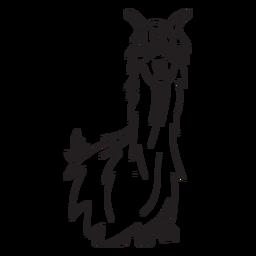 Llama sitting stroke