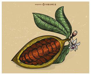 Ilustración de fruta de cacao