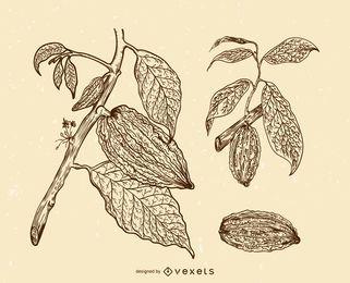 Conjunto de ilustração de frutos de cacau