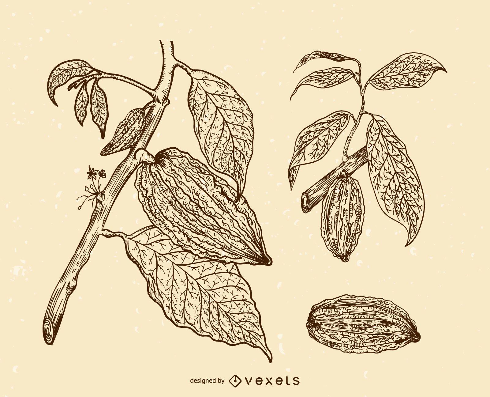 Cacao fruits illustration set