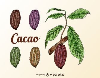 Cacao fruits set