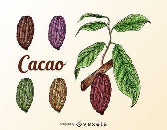 Conjunto de frutas de cacao