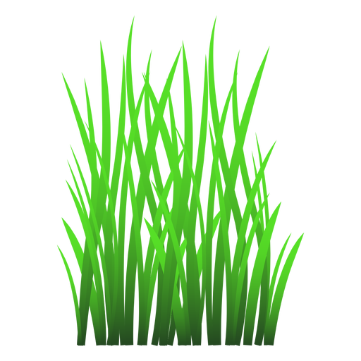 Grass leaves illustration Transparent PNG