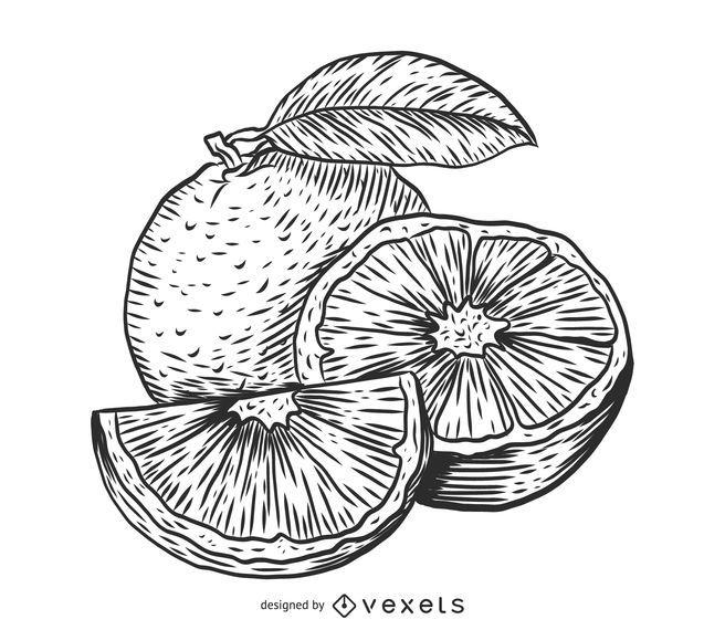 Bosquejo naranja dibujo