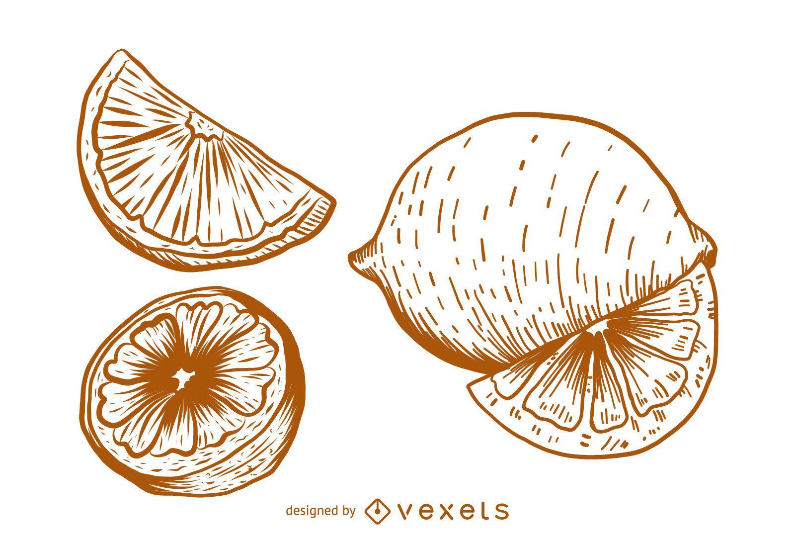 Lemon sketch drawing
