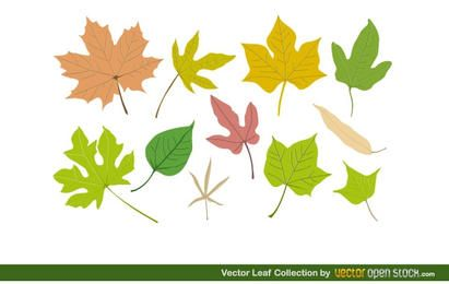 Coleção de folhas de vetor