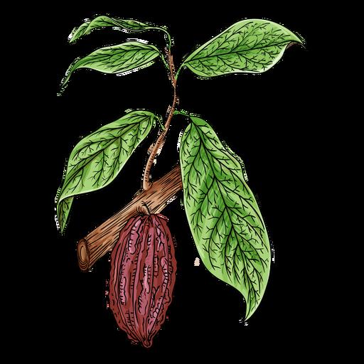 Ilustração de ramo de fruta de cacau Transparent PNG