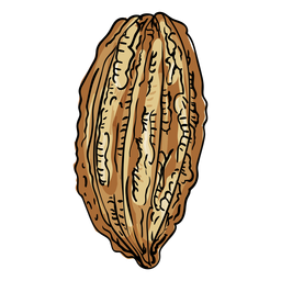 Cacao tree fruit illustration