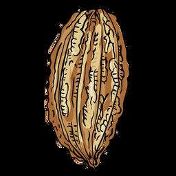 Ilustração de frutas de árvore de cacau
