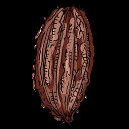 Ilustración de la vaina de cacao