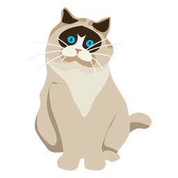 Exotic shorthair cat illustration