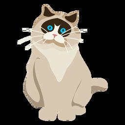Ilustración de gato exótico de pelo corto