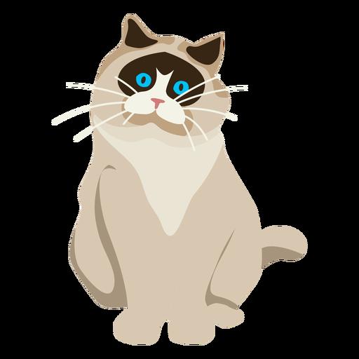 Exotic shorthair cat illustration Transparent PNG