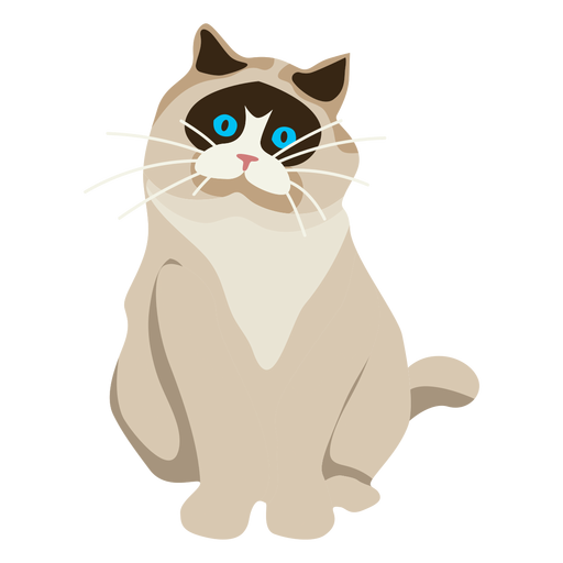 Ilustração de gato exótico shorthair Transparent PNG