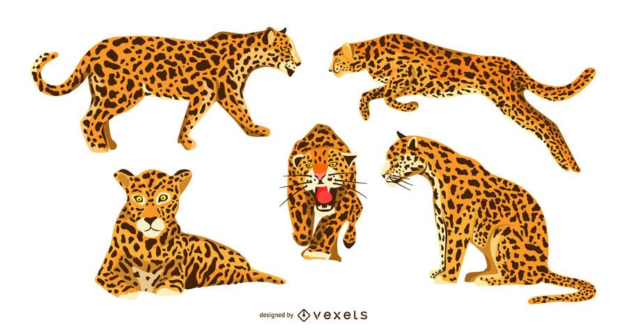Jaguar Graphic Design Set
