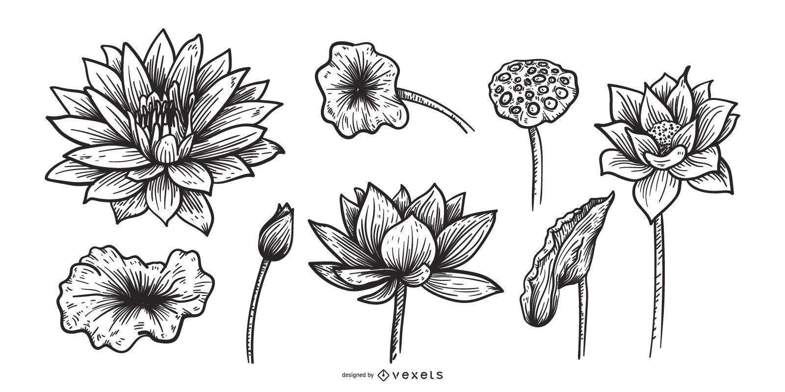 Conjunto de flores de loto dibujado a mano