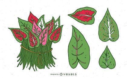 Conjunto de hojas de caladio