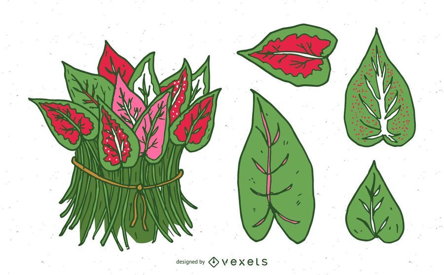 Caladium Leaves Set