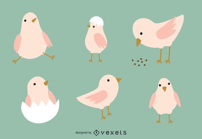 Chicken Illustration Set