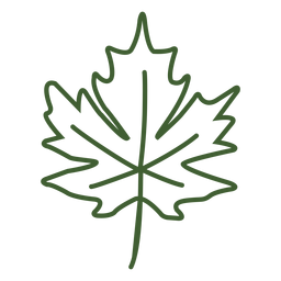 Flat maple leaf icon