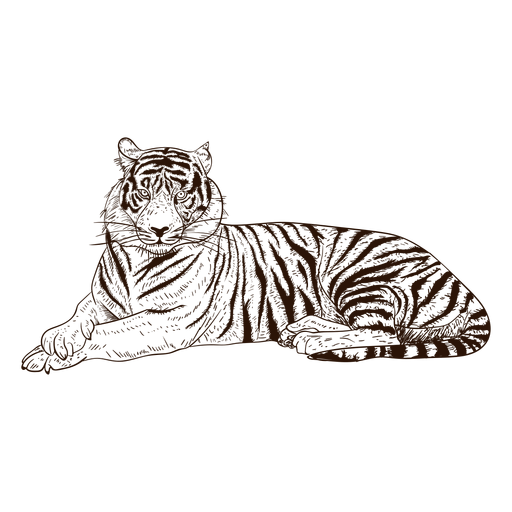 Hand drawn relaxing tiger illustration Transparent PNG