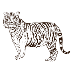 Ilustración de dibujado a mano de tigre de selva