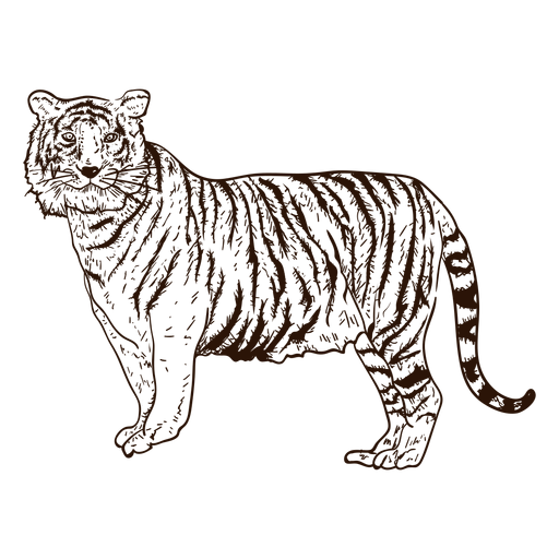 Jungle tiger hand drawn illustration Transparent PNG