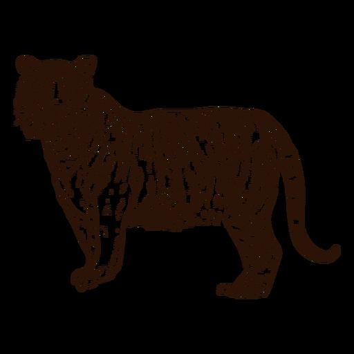 Tigre da selva mão ilustrações desenhadas Transparent PNG