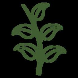 Folhas, ligado, um, ramo, ícone