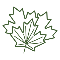 Maple tree leaf icon
