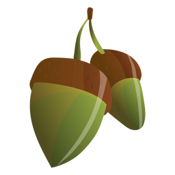 Acorns illustration