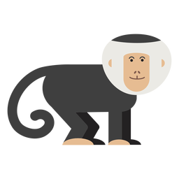 Capuchin monkey illustration