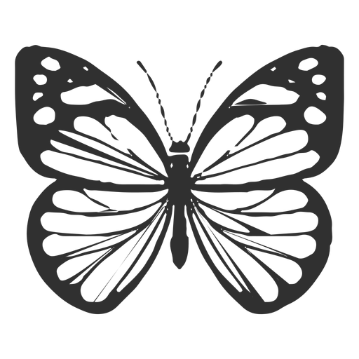 Silhueta de borboleta branca Chiricahua